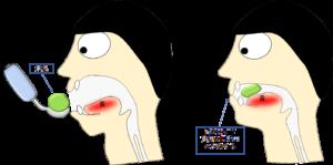パタカラ体操「ぱ」の口の中の動き